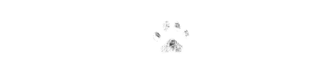 Loves Dogs Adopt Don't Shop Special Needs Dogs Dog Owner Tips Puppy Tips Dog Tips Dog Training Help with Dogs Dog Lovers Lora Tucker Kaasch