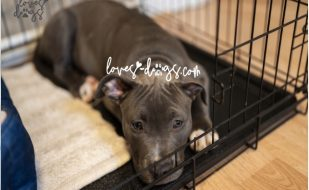 Blog Featured Image - Puppy and Dog Crate Training Plan