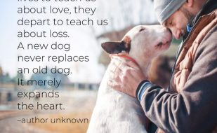 Dogs come into out lives to teach us about love, they depart to teach us about loss. A new dog never replaces an old dog. It merely expands the heart.