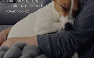 """""""Once you have had a wonderful dog, a life without one, is a life diminished."""" – Dean Koontz"""